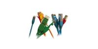 30857 Hyperline PC-LPM-UTP-RJ45-RJ45-C5e-1M-LSZH-GN Патч-корд U/UTP, Cat.5е, LSZH, 1 м, зеленый